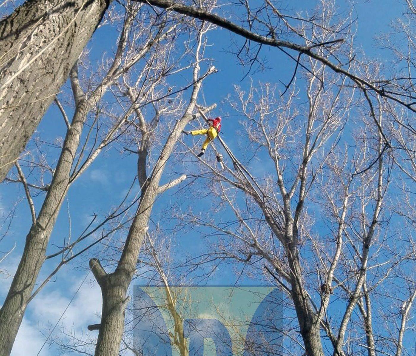 Toaletare copaci in Bucuresti si judetele limitrofe - Lucrari la inaltime oferite de alpinistii utilitari de la Deceneu Alpin