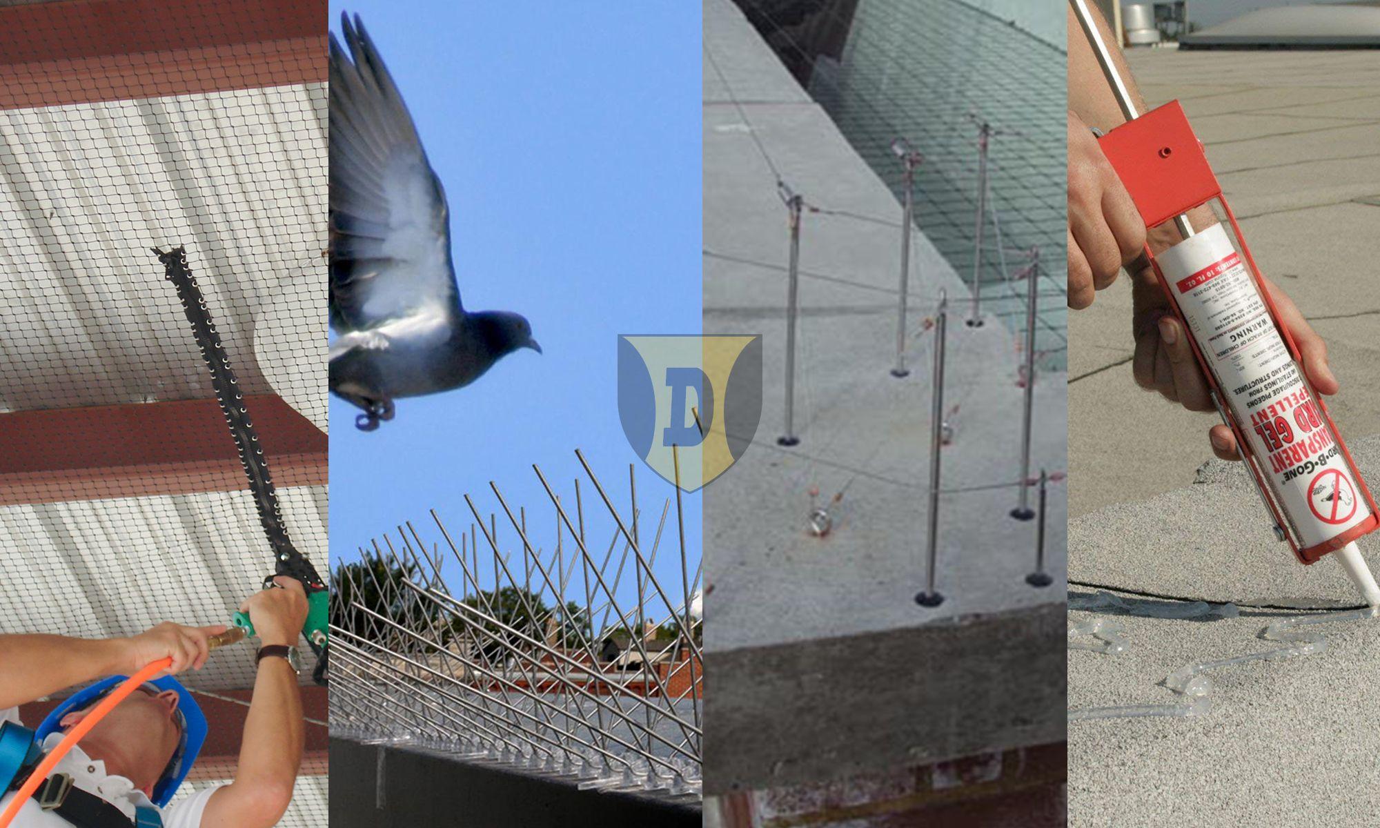 Protectie impotriva pasarilor - Montam si instalam sisteme de protectie contra pasarilor precum plase, spini, sarme sau gel