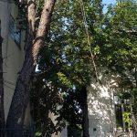 Pregatiri toaletare copac curte