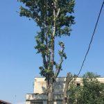 Taieri de intretinere a copacilor cu alpinisti utilitari