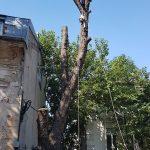 Taieri periculoase arbori in curte privata