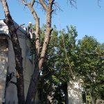 Toaletare arbori client bucuresti